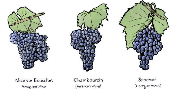 Wine Term: Teinturier Grapes